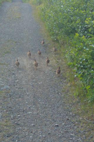 TIT chics running