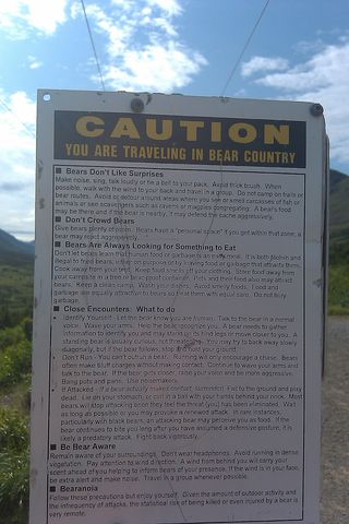 TIT Bear Country PP