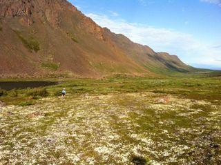 Tit tundra running: mike