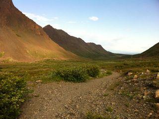 Tit tundra running